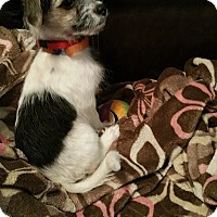 Adopt A Pet :: Phil - Fairview Heights, IL