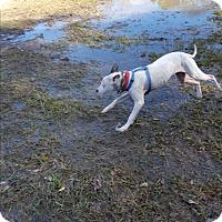 Adopt A Pet :: Cara - Marianna, FL