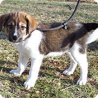 Adopt A Pet :: Wrigley - Milford, NJ