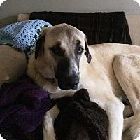 Adopt A Pet :: Pullo - Blackstock, ON