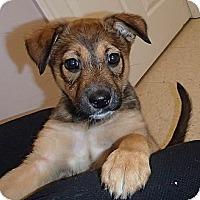 Adopt A Pet :: Jamari - Pocahontas, AR