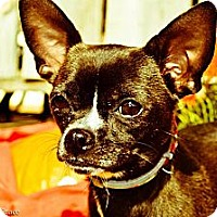 Adopt A Pet :: Abby - Woodlawn, TN
