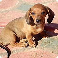 Adopt A Pet :: Rabbit - San Jose, CA