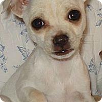 Adopt A Pet :: Olivia - Seattle, WA