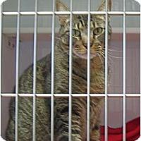 Adopt A Pet :: Marley - Deerfield Beach, FL