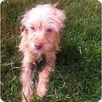 Adopt A Pet :: Kenny - Oceanside, CA