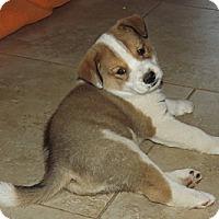 Adopt A Pet :: Fletch - Phoenix, AZ