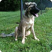Adopt A Pet :: GARTH - ROCKMART, GA