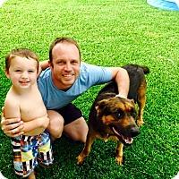 Adopt A Pet :: Duke - Austin, TX