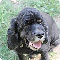 Adopt A Pet :: Finnegan - Lodi, CA