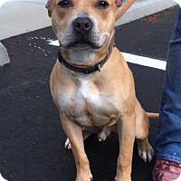 Adopt A Pet :: Ruckus - Cashiers, NC