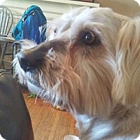 Adopt A Pet :: Shaggy - Hamilton, ON