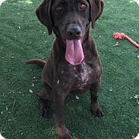 Adopt A Pet :: Hazel - Temecula, CA