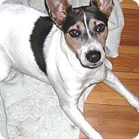 Adopt A Pet :: PRESLEY - Hollywood, FL