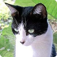 Adopt A Pet :: Noele - Palm City, FL