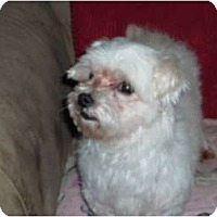 Adopt A Pet :: Dolly - Pointblank, TX