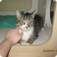 Adopt A Pet :: Nelson - West Dundee, IL