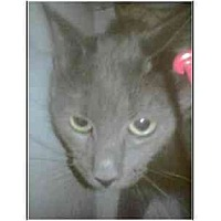 Adopt A Pet :: Slate (mixed breed) - Owasso, OK