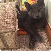 Adopt A Pet :: Pauly - Chesterfield Township, MI