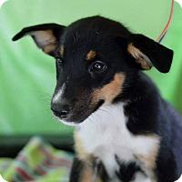 Adopt A Pet :: Roper - Bedminster, NJ