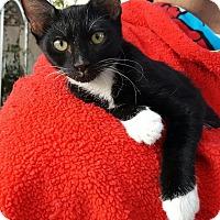 Adopt A Pet :: Calvin - Scottsdale, AZ