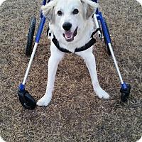 Adopt A Pet :: Link  *ADOPTED - Tulsa, OK