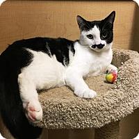 Adopt A Pet :: Boris - Riverside, CA