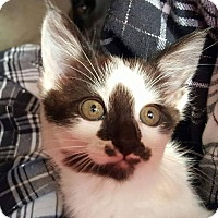 Adopt A Pet :: Mia - Woodstock, GA