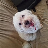 Adopt A Pet :: Charlee - Los Angeles, CA