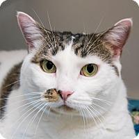 Adopt A Pet :: Monique - Seville, OH