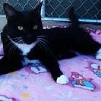 Adopt A Pet :: Sissy Pie - Calimesa, CA
