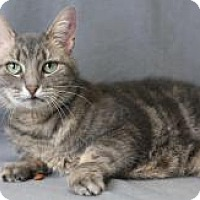 Adopt A Pet :: Alicia Keys - Blackwood, NJ