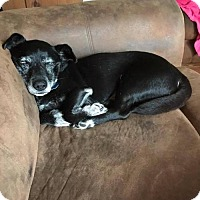Adopt A Pet :: Buster - Clifton, TX