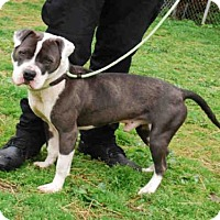 Adopt A Pet :: JOHNNY RYALL - Louisville, KY