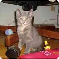 Adopt A Pet :: Elphie - Milwaukee, WI