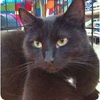 Adopt A Pet :: Sissy - Modesto, CA