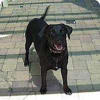Adopt A Pet :: TONY - Torrance, CA