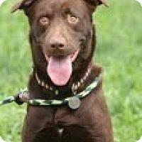 Adopt A Pet :: Stewie - Lewisville, IN