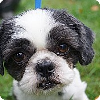 Adopt A Pet :: Bordentown NJ - Sammy - New Jersey, NJ