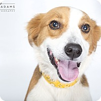 Adopt A Pet :: Colin - PENDING - kennebunkport, ME