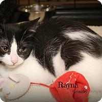 Adopt A Pet :: Rayna - Springfield, PA