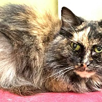 Adopt A Pet :: Katie - Maryville, TN