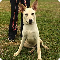 Adopt A Pet :: Nala - San Leon, TX