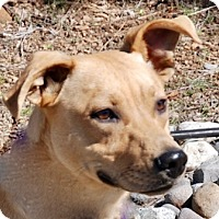 Adopt A Pet :: Sparkle - Portola, CA