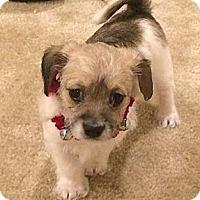 Adopt A Pet :: Winston - La Habra Heights, CA