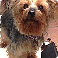 Adopt A Pet :: Nana - Somers, CT