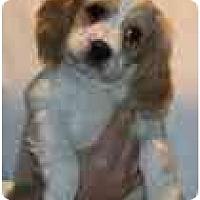 Adopt A Pet :: Latte - Portland, OR