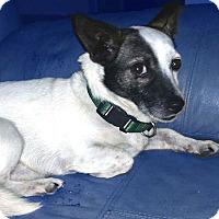 Adopt A Pet :: Murray - San Francisco, CA