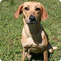 Adopt A Pet :: Honey - Lufkin, TX