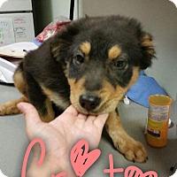 Adopt A Pet :: Frito - Garden City, MI
